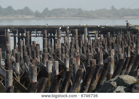 old dock pilings