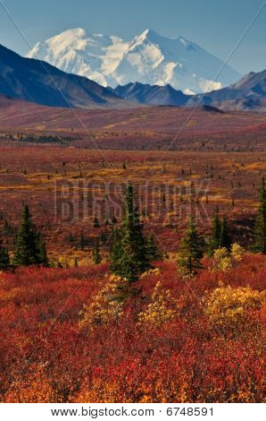 Mt McKinley with red autumn tundra