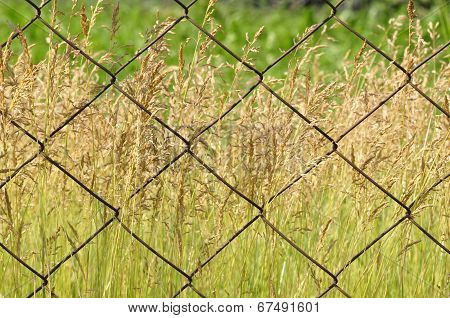 Grass and steel mesh.