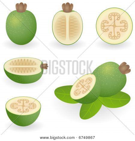 Icon Set Feijoa
