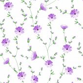 foto of chicory  - Chicory seamless pattern on white background - JPG