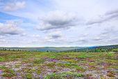 foto of laplander  - Beautiful summer tundra landscape in Lapland Finland - JPG