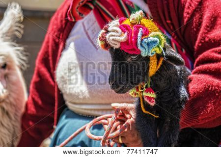 Peru Woman Baby Alpaca