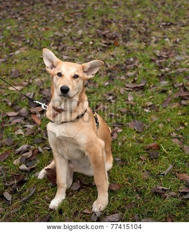 Small Yellow Dog Collar Sitting On Grass