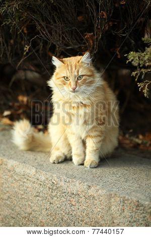 Beautiful big cat, outdoors
