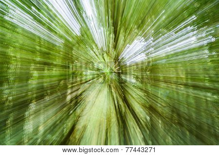 Abstract Nature Background In Deep Rainforest. Blur Effect ,doi Inthanon Park, Thailand