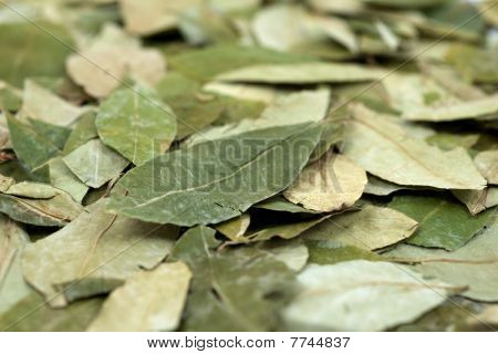 Cocaine Raw Material - Dried Coca Leaves