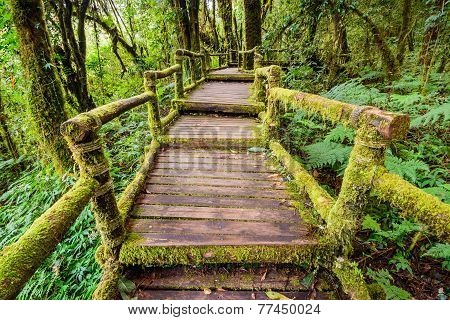 Beautiful Rain Forest At Ang Ka Nature Trail In Doi Inthanon National Park,chiang Mai, Thailand.