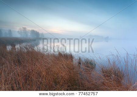 Misty Autumn Swamp