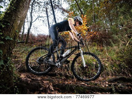 Cyclist On A Mountain Bike Riding In The Forest