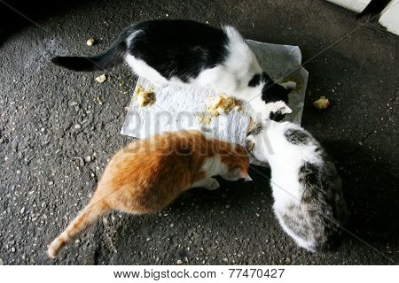 Three Cats Eating Food From The Floor