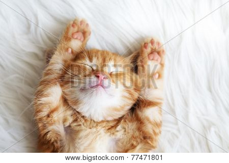 Cute little red kitten sleeps on fur white blanket