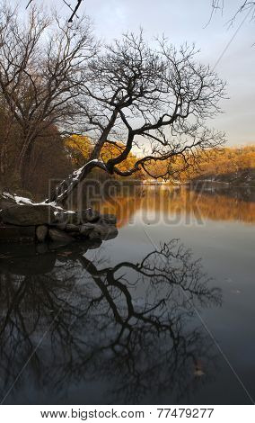 Van Cortlandt Park At Daylight