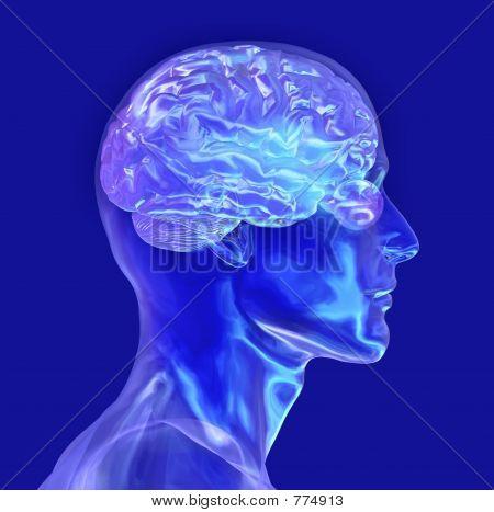 Glass Head with Brain