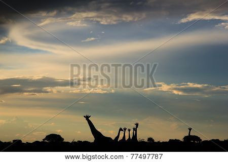 Giraffe Silhouette - African Wildlife Background - Sunset Wonder and Epic Peace