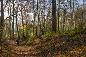 stock photo of hollow  - Hollow way in a sunny forest in autumn