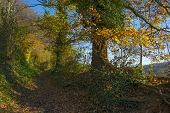 stock photo of hollow  - Hollow way in a sunny forest in autumn - JPG