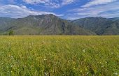 picture of hayfield  - Meadow in the Altai Mountains - JPG