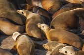 image of sea lion  - A group of sea lions are resting on an old abandoned ship in the bay of Ensenada in Mexico - JPG
