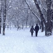 picture of snow forest  - Lovers man and woman walking in the forest holding hands - JPG