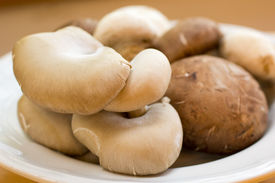 pic of crimini mushroom  - Oyster and crimini mushrooms are beautifully laid out and ready for cooking - JPG