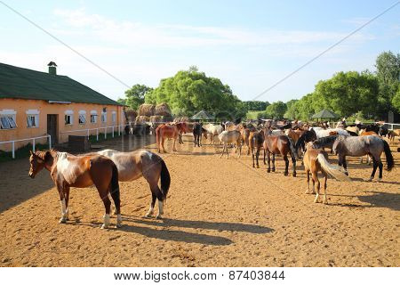 MOZHAISK, RUSSIA - JUN 08, 2014: Horse stable with a shelter for horses on the equestrian ranch Avanpost