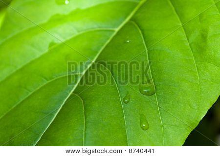 plants leaf