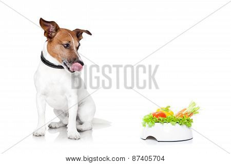 Hungry Dog With Healthy Bowl