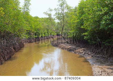 Wet Land Ana Tidal Water Area  Of Mangrove Forest In Pranburi National Park Southern Of Thailand