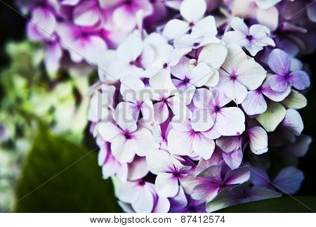 Little beautiful pink flowers on pink background with color filters, spring flowers, romantic backgr
