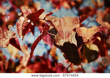 Red leaves of a cherry tree against the blue sky, Beautiful colorful autumn leaves. Vintage look