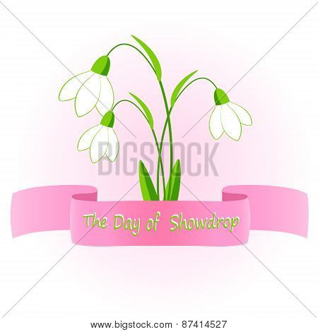 vector illustration of snowdrop flowers.