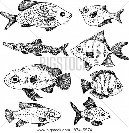 Ink drawing fishes