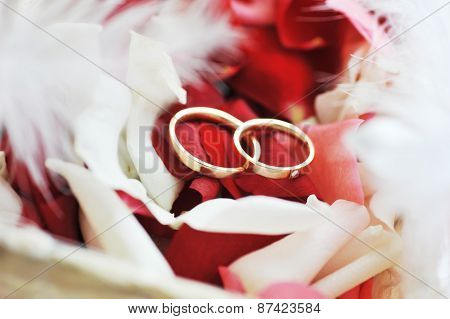 Roses Petals And Rings