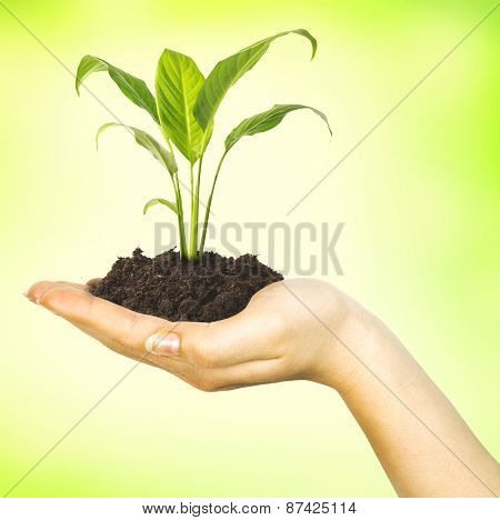 Green plant in woman hand isolated on green background