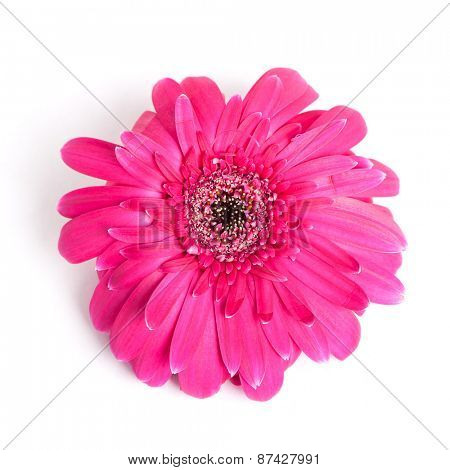 Wilted flower isolated on white background
