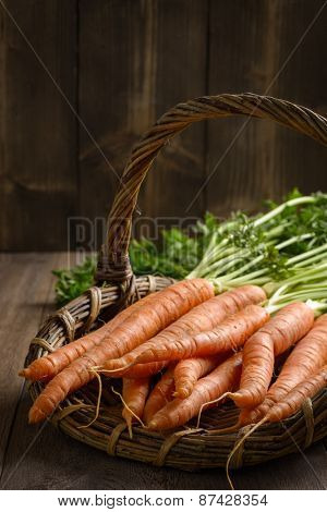 Close up of basket filled with freshly picked dirty carrots