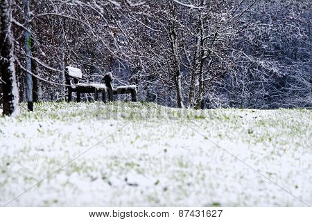 Winter In A Park. Isolated Benches