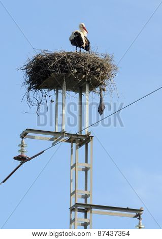 Stork on he Electricity Pylon