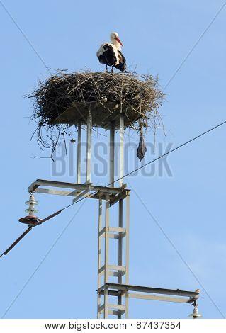 Stork on he Electricity Pylon