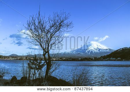 Naked Branches Of A Tree Against Blue Sky With Mt.fuji In The Background