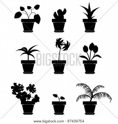 Vector Home Plants Clipart