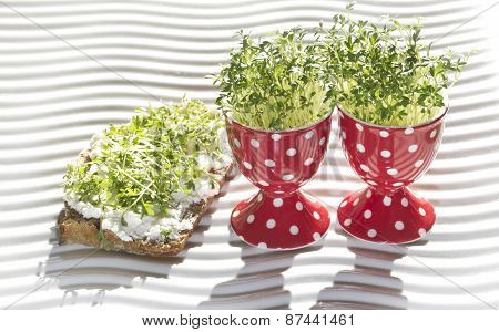 fresh cress in egg cup
