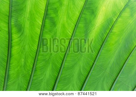 botany, nature, biology, eco and flora concept - green palm tree leaf