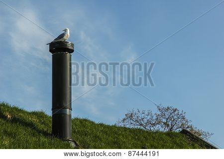 Seagull On The Top Of The Grass Roof Chimney
