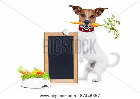 Hungry Dog With Healthy  Vegan Bowl