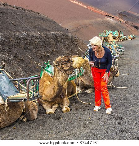 Woman Ejnjoys Looking To Camels For A Camel Ride