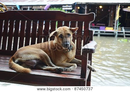 dog on the chair side the canal