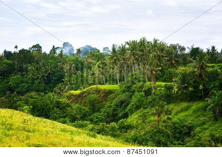 Tropical Jungle On The Island Of Bali, Indonesia