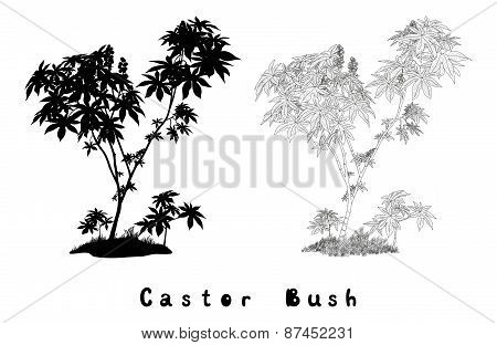 Castor Plant Contours, Silhouette and Inscriptions